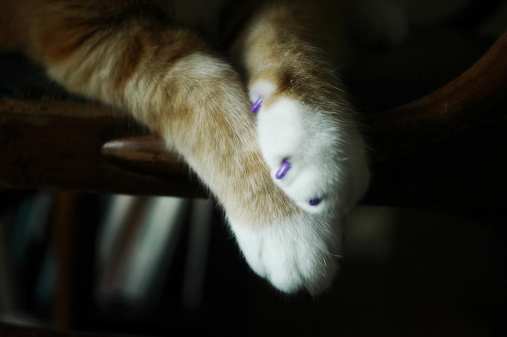 Как применять антицарапки для кошек