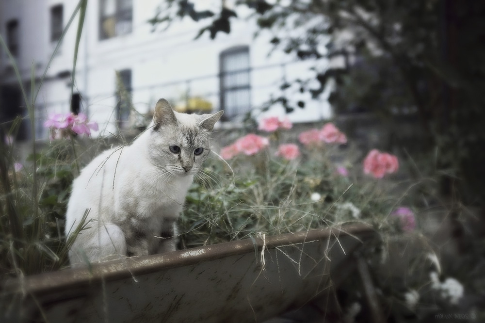 Древесный наполнитель для кошачьего туалета