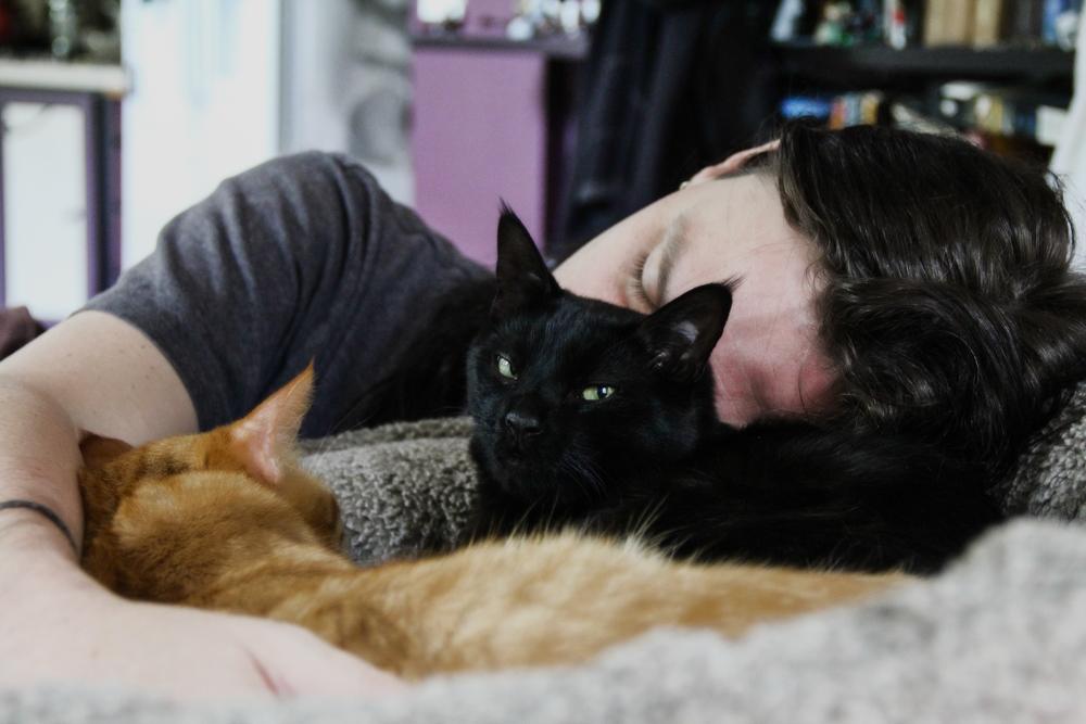 Фелинотерапия: как кошки лечат людей