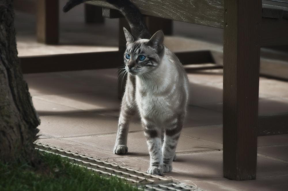 Как определить возраст кошки?