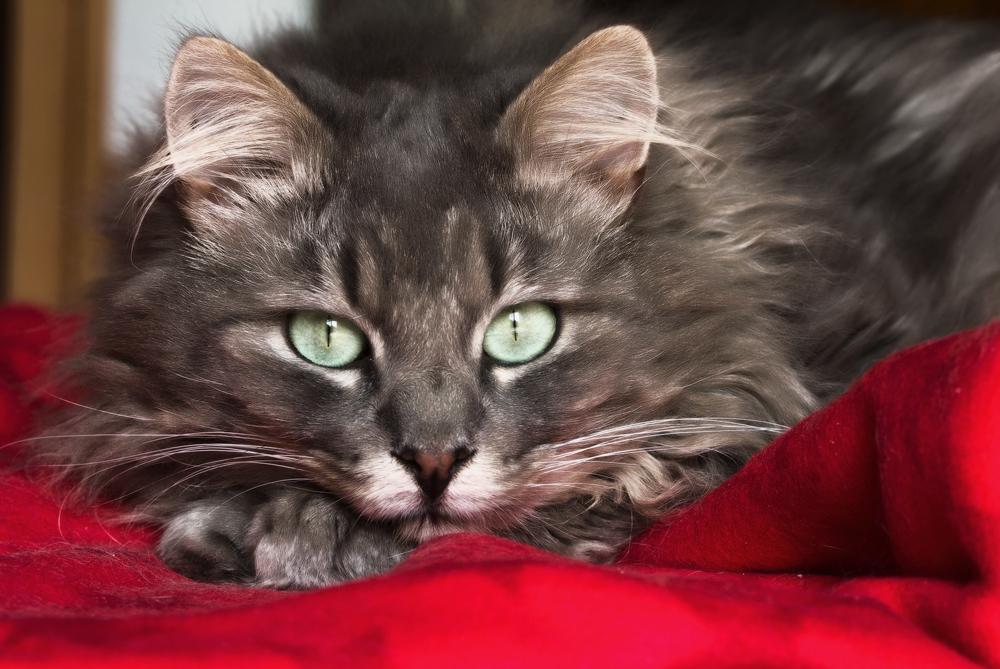 Корм для кошек Эукануба - обзор