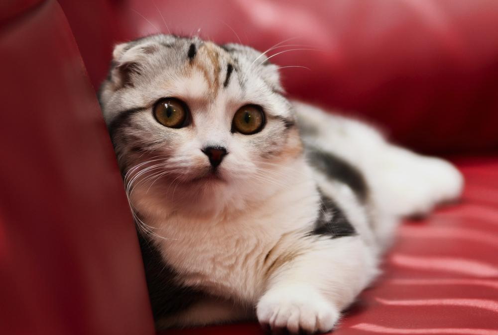 Смешные коты и кошки
