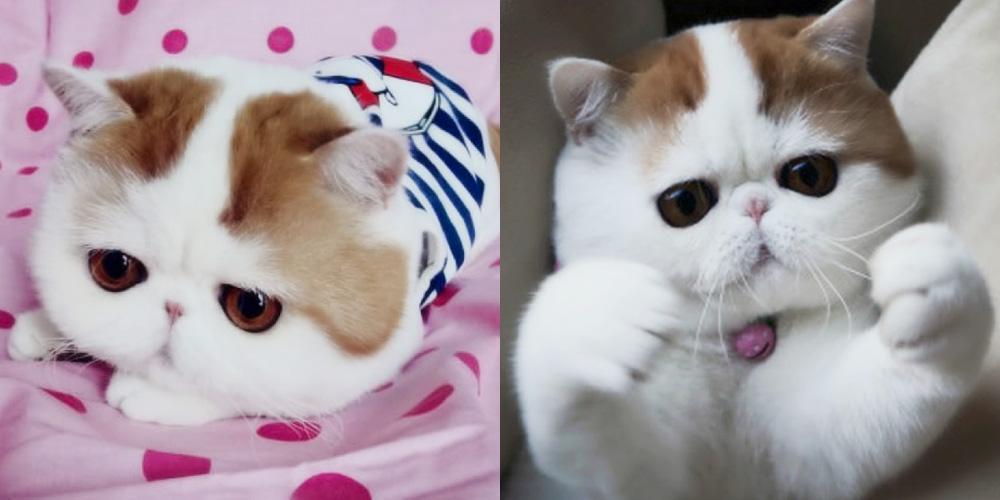 Милейший Снупи кот