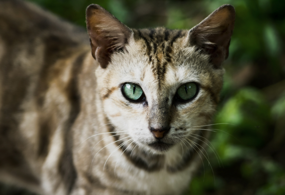 Стронгхолд для кошек: инструкция по борьбе с паразитами
