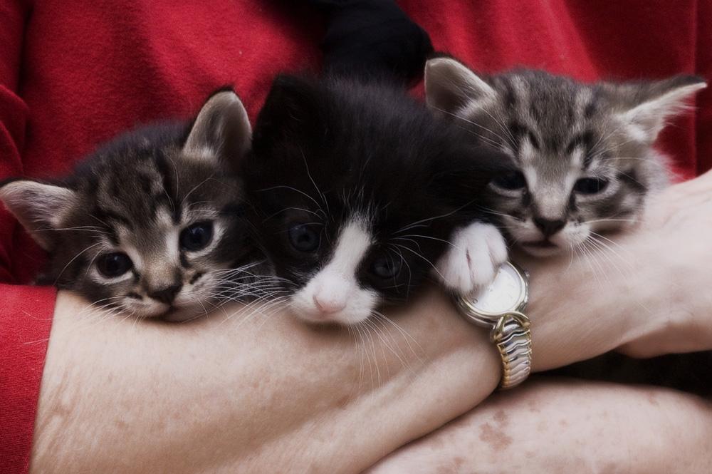 Чем кормить котенка и как правильно?