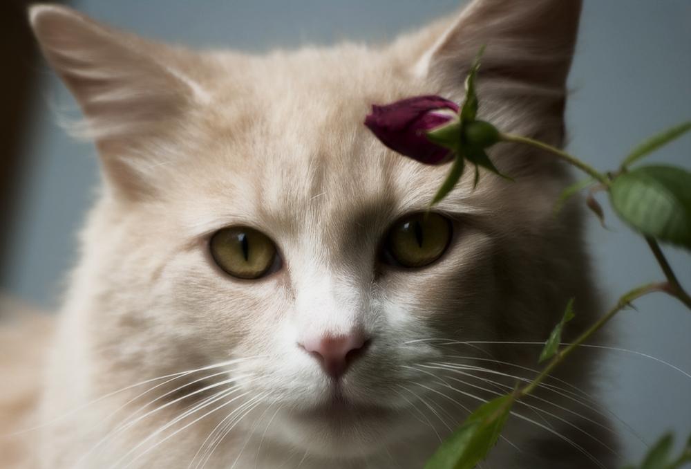 Различают ли кошки цвета, и как именно? Как видят этот мир четвероногие охотники - в цвете или черно-белым? Для чего может пригодиться знать это.