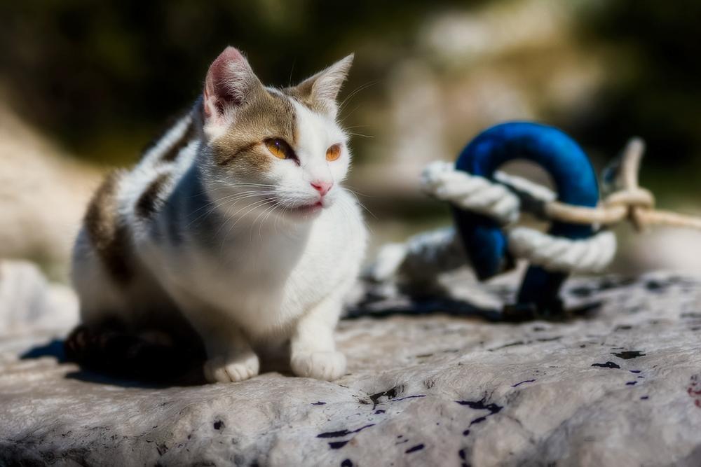 Цестал для кошек: инструкция по применению