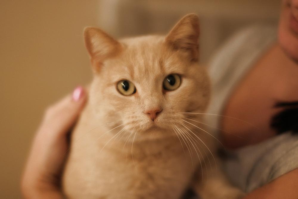 Чем лечить астму у кота