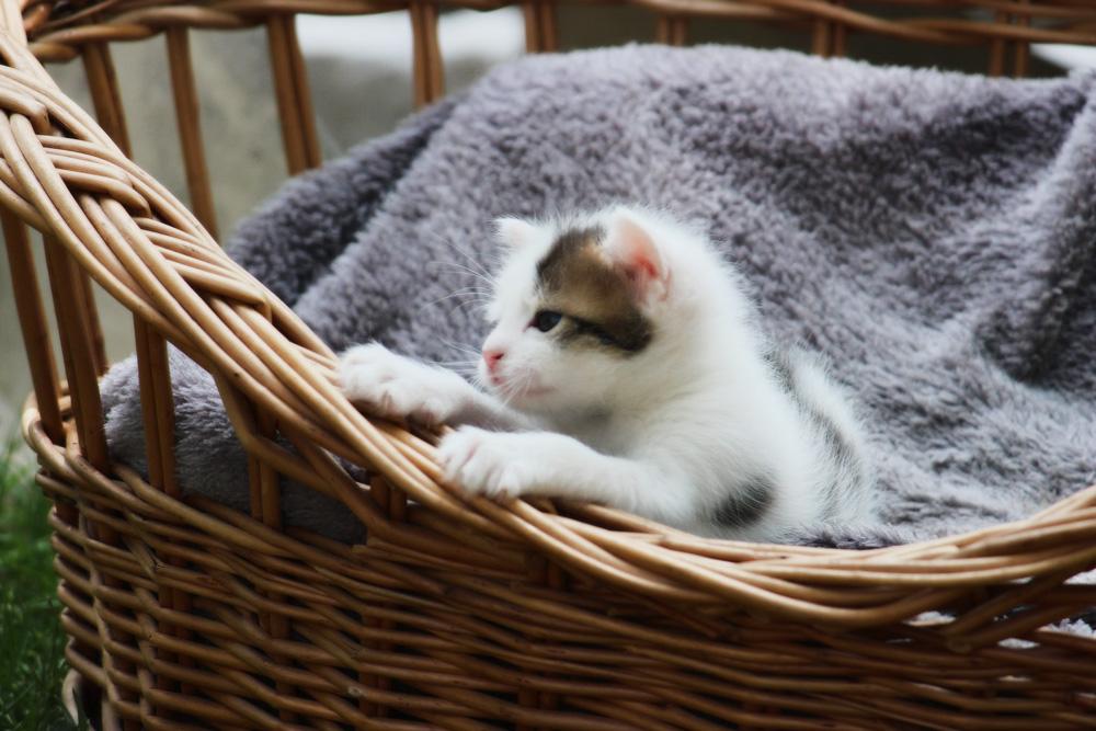 Домашняя кошка - самый древний компаньон человека