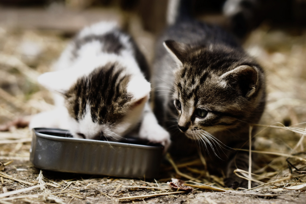 Корм для кошек Бозита: состав и особенности