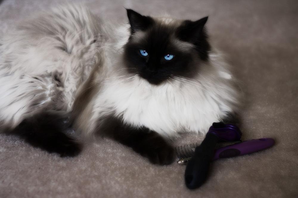 Кошка сильно линяет - что делать?