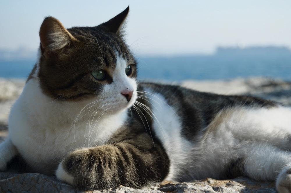 Кот или кошка - кого выбрать?