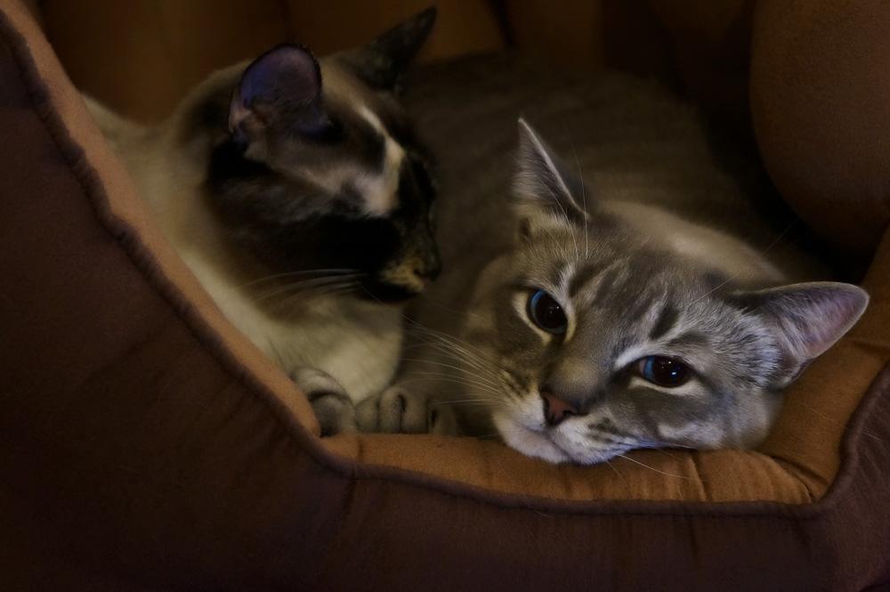 Какой должна быть лежанка для кошки?