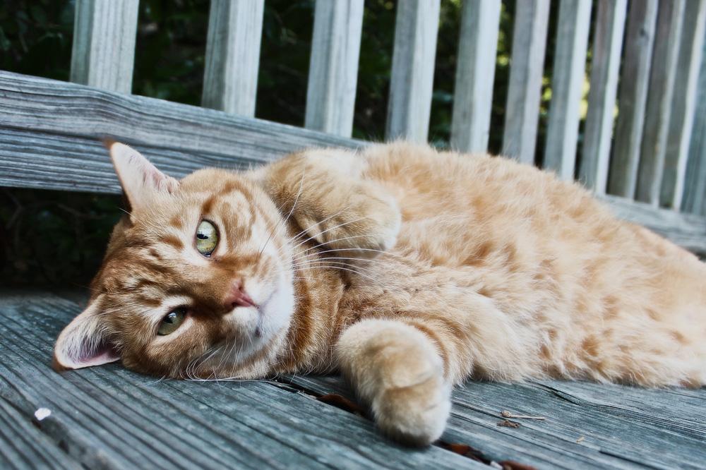 Лямблиоз у кошек: симптомы и лечение