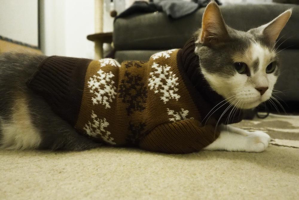 Одежда для кошек: блажь или необходимость?