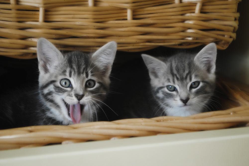 Прикольные клички для котов и кошек