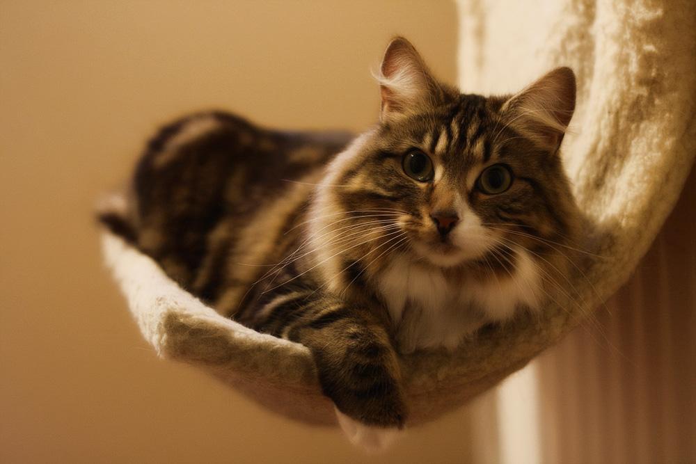 Самые нужные товары для кошек и котов