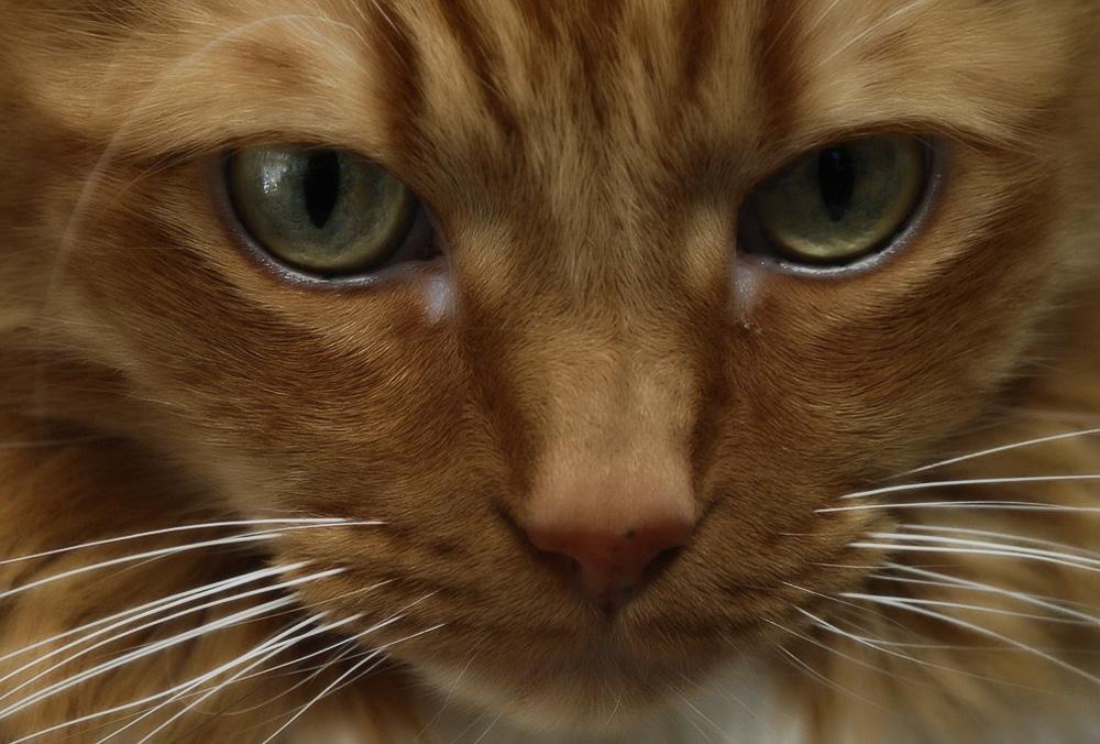 Почему у кота сухой нос и нормально ли это?