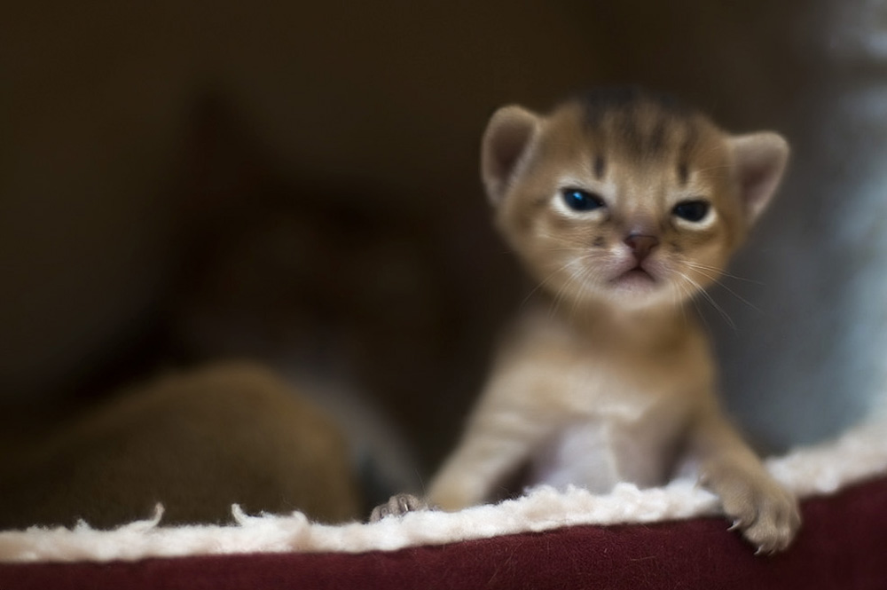 В каком возрасте брать котенка лучше всего?